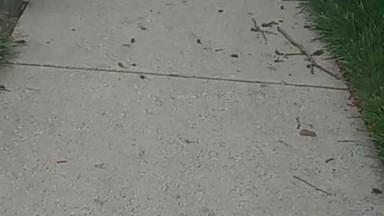 ASMR Fighting off a cloud of cicadas for my 16th birthday